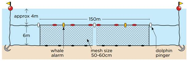 Figure 3.1: How shark nets operate under the New South Wales North Coast trial