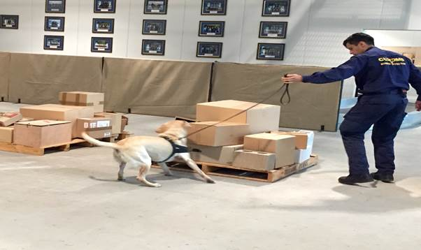 Figure 2.1: Customs' officer and dog searching pallet for explosives as part of a training exercise