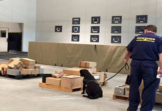 Figure 2.2: Detector dog alerting handler to the presence of explosives in the package as part of a training exercise