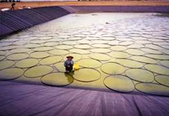 Trial solar pond developed by RMIT Melbourne.
