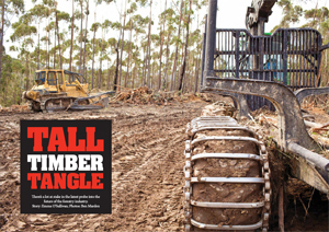 Tall Timber Tangle article image