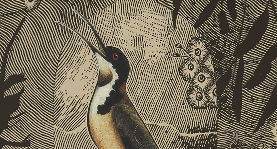 A print of a honeysuckle bird surrounded by eucalyptus leaves and flowers