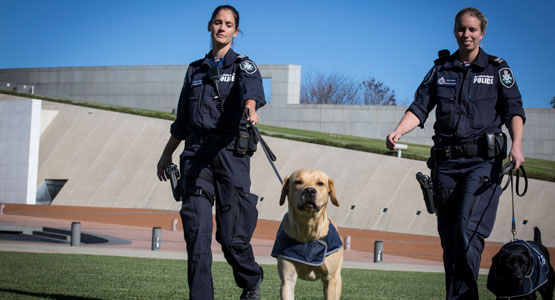 Australian Federal Police Officers with dogs