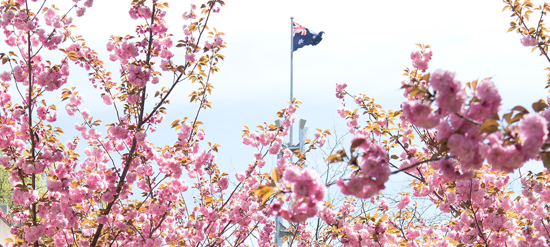 Spring at Parliament House