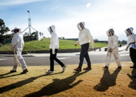 Bee keepers on their way to the first harvest of Parliament House honey.